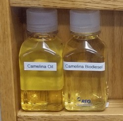 Camelina Oil and Camelina BioDiesel