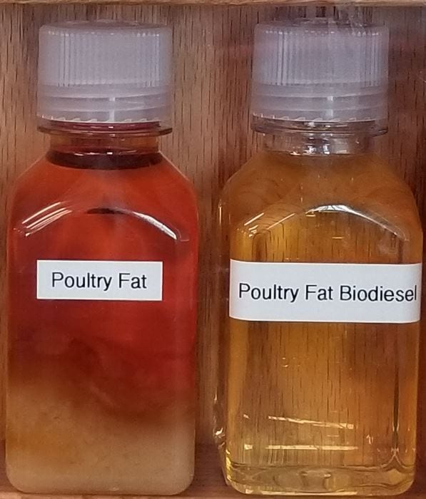 Poultry Fat Feedstock and Bio-Diesel
